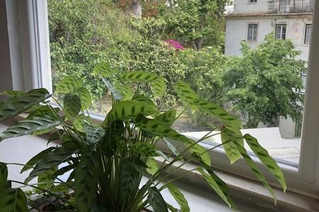 O Cowork Central Príncipe Real tem uma linda vista sobre o jardim botânico com plantas dentro e fora