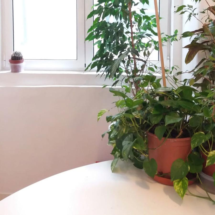 Lovely natural light and plants for a remote coworker at Cais do Sodre